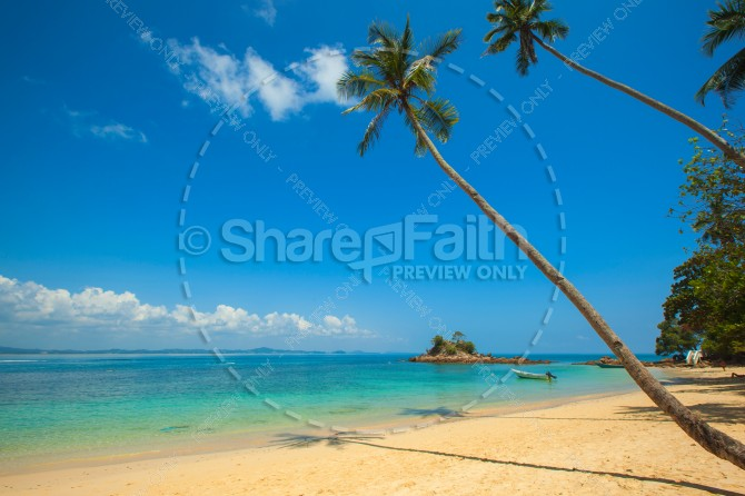 Tropical Beach Palm Trees Ministry Stock Photo
