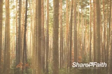 Serene Woods Worship Motion Background