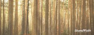 Serene Woods Triple Wide Worship Video Loop