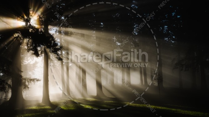 Light in the Dark Forest Religious Stock Photo