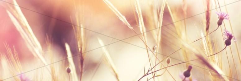 Authentic Faith Harvest Church Website Banner