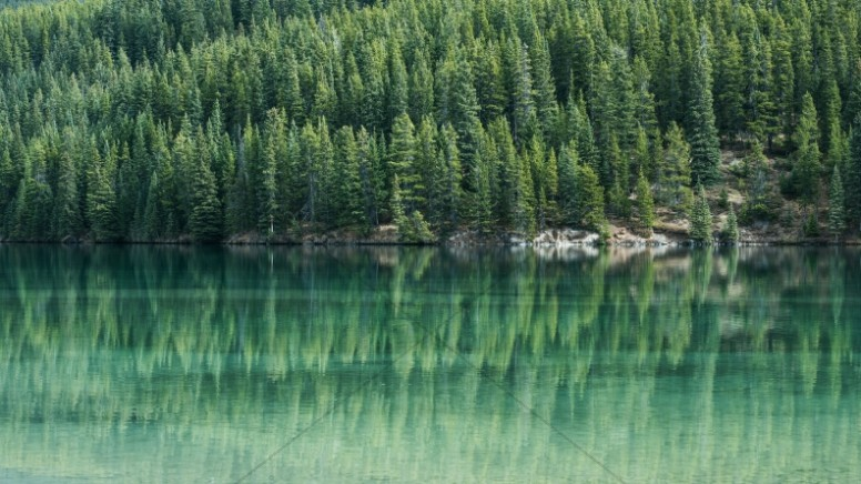 Green Trees By The Lake Christian Stock Image