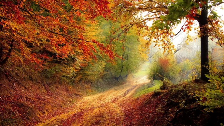 Autumn Leaves Falling on the Road Christian Stock Photo