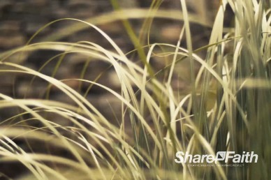 Tall Grass Blowing in the Wind Worship Motion Loop