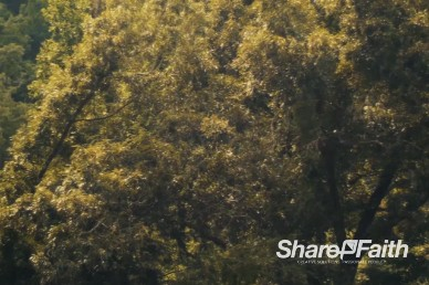 Tree Branches Gently Blowing in the Wind Christian Video Background