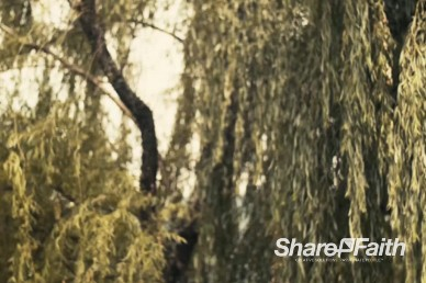 Wind in the Willow Branches Church Worship Video Loop