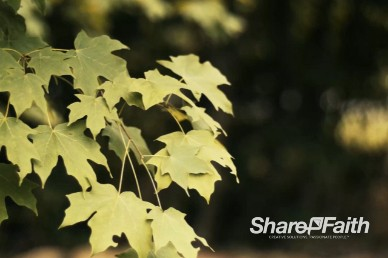 Swaying Leaves Background Video Worship Loop