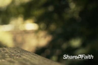Tree Leaves Waving in the Background Video Loop