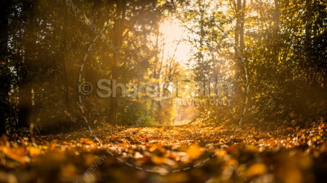Fall Leaves on the Road Christian Stock Photo