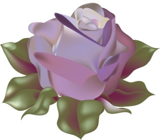 Blossoming Purple Rose