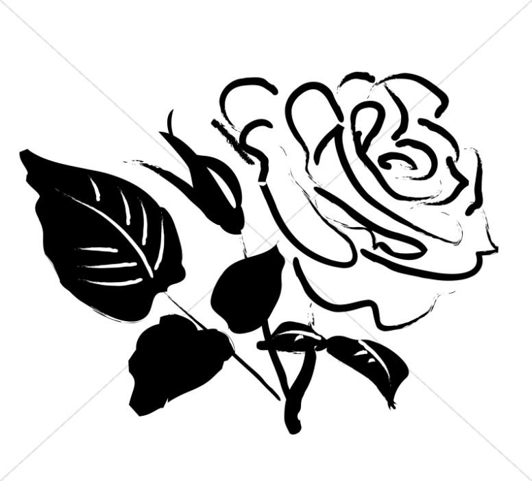 Rose Blossom Sketch