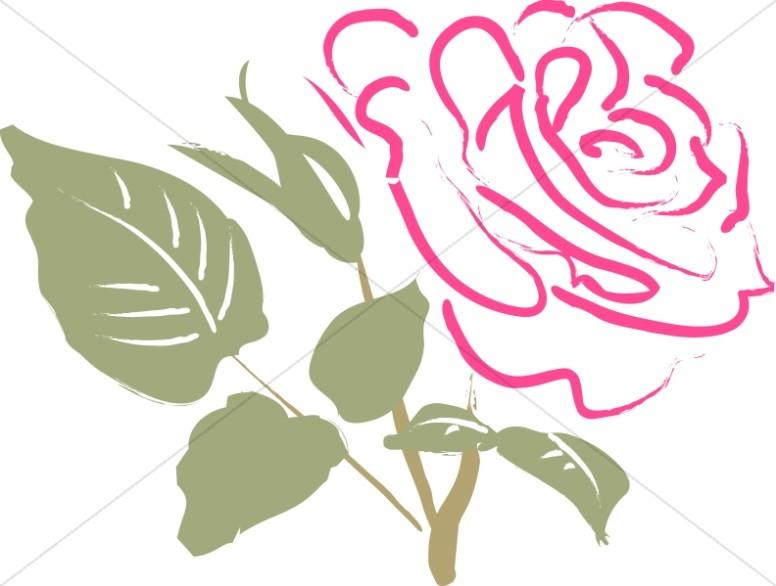 Deep Pink Rose Sketch
