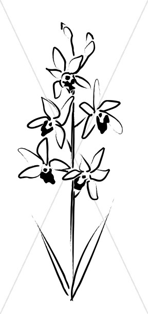 Ink Sketch of Orchids Blooming