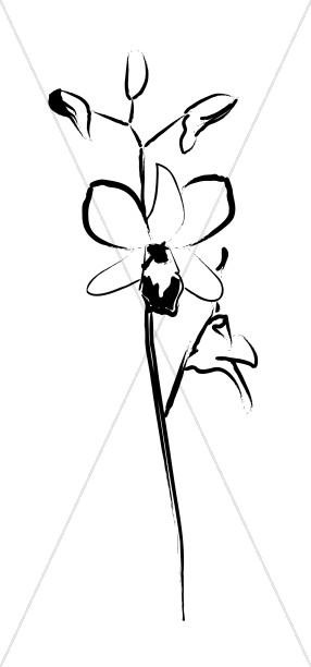 Summer Floral Sketch