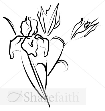Flower Sketch