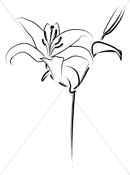Easter Lily Line Art