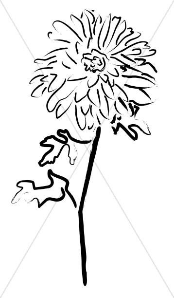Planted Mum Sketch