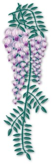 Realistic Trailing Wisteria