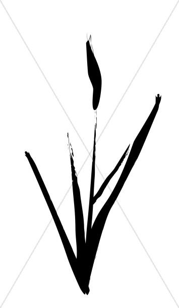 Brushstrok Cattail