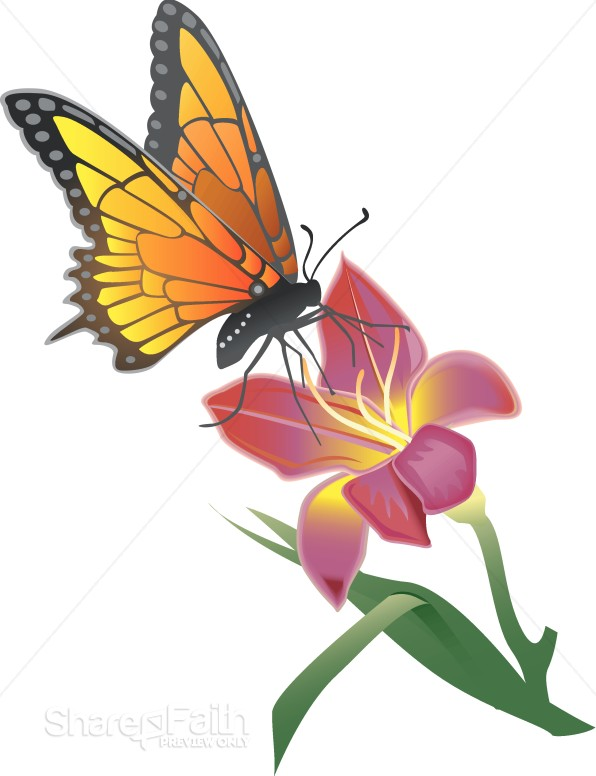 Monarch butterfly Resting on a Lily Butterfly Clipart