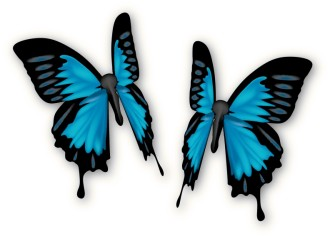 Pair of Blue Butterflies