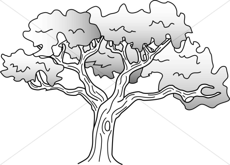 Simple oak tree drawing nature clipart