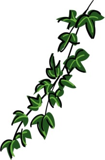 Contemporary Ivy Vine