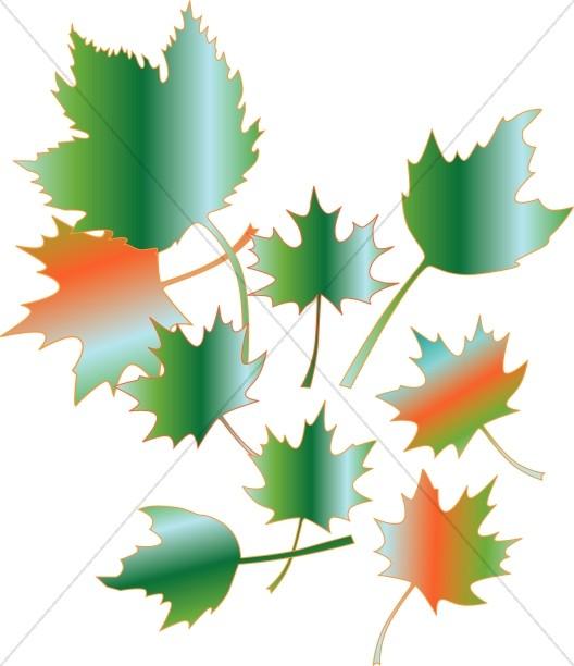 Gradient Style Maple Leaves