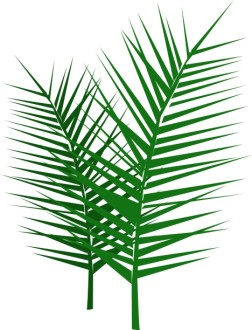 Leafy Palm Branches