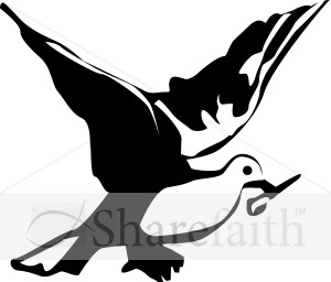 Black and White Dove