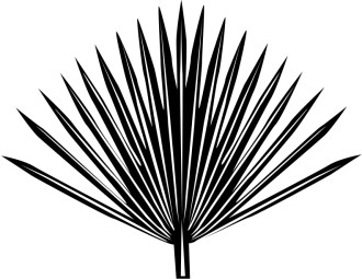 Single radiating Palm Frond