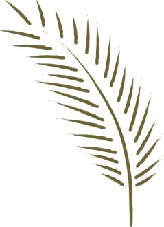 Simple Palm Frond
