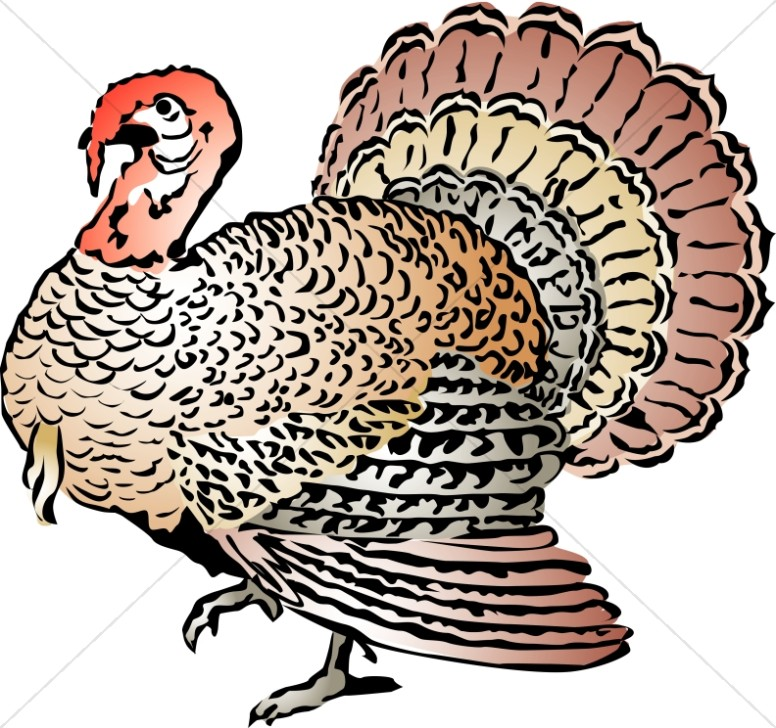 Woodcut Style Turkey with Color
