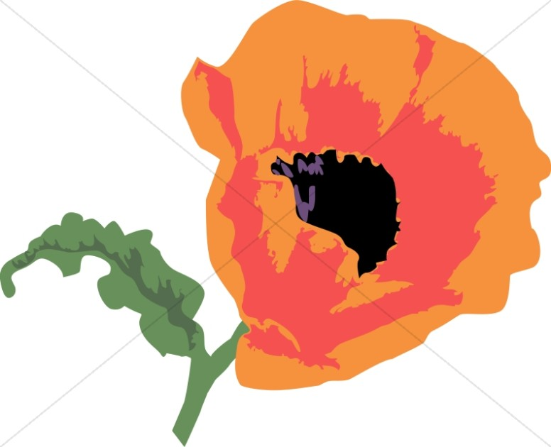 Golden Poppy Blossom