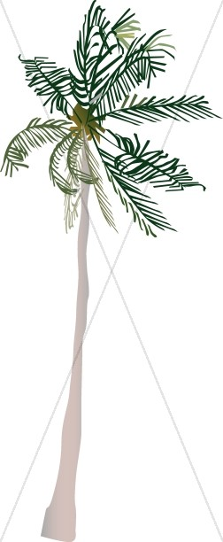Basic Palm Tree