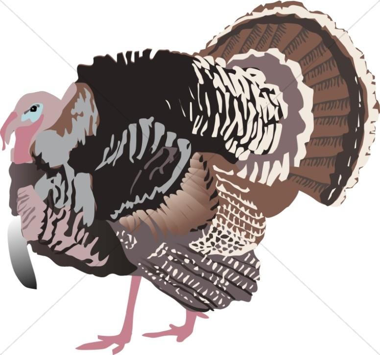 Detailed Turkey