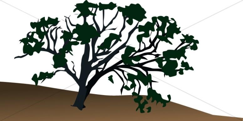 Old Tree on Hillside