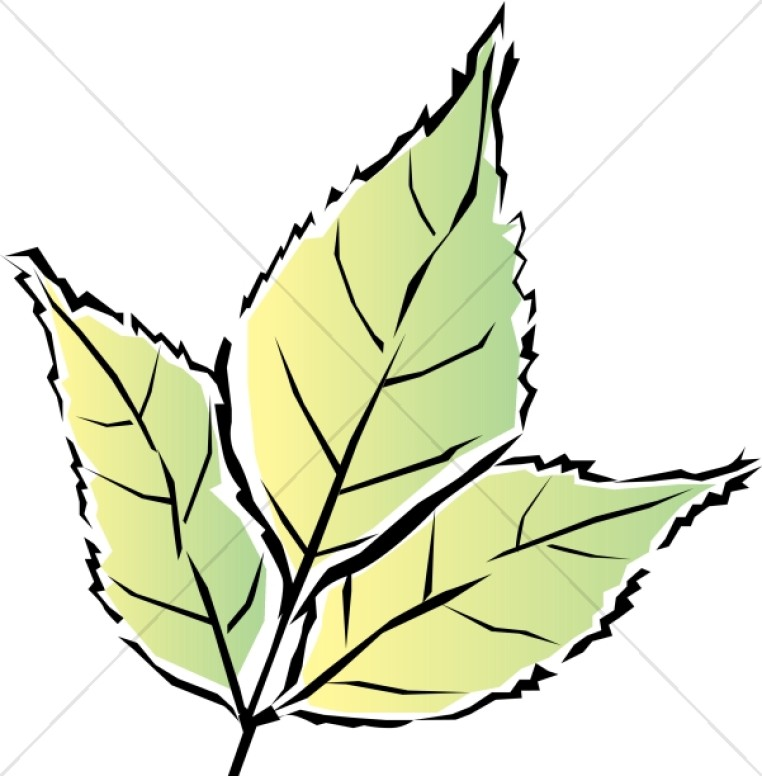 Colorful Green Tri Leaf