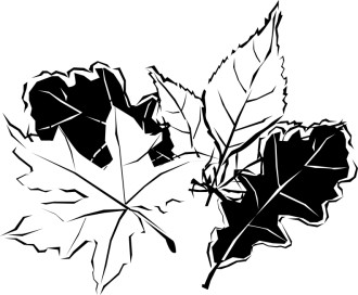 Black and White Autumn Leaves