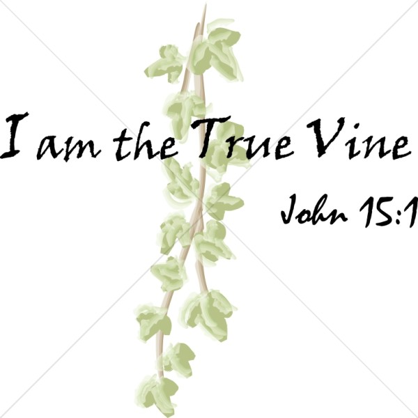 I am the True Vine Scripture 2   John 15:1