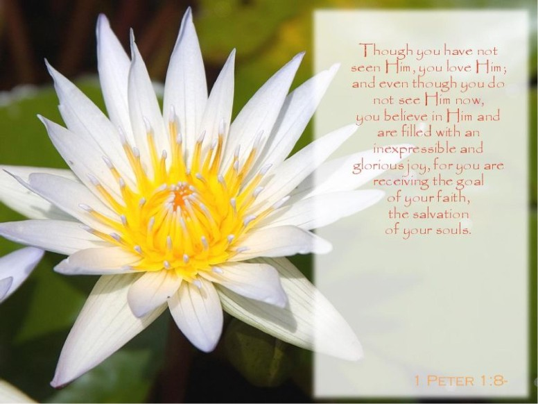 Water Lily with Verse from 1 Peter