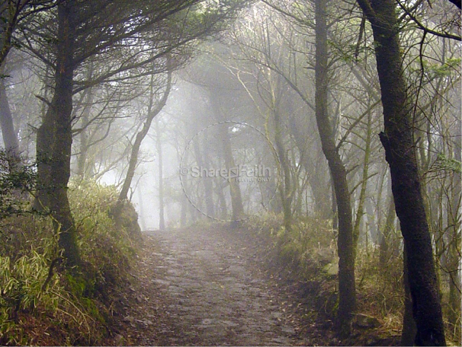 Inspirational Paths: Inspirational Path In The Woods And Quote From Proverbs