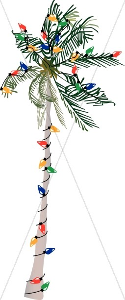 Palm Tree Strung with Lights