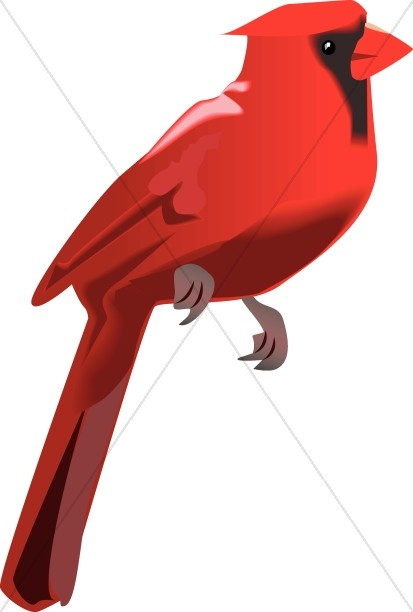 Cardinal Perched Wildlife Clipart