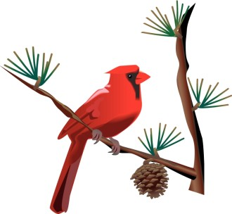 Red Cardinal on Branch