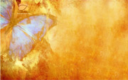 Butterfly Free Twitter Background