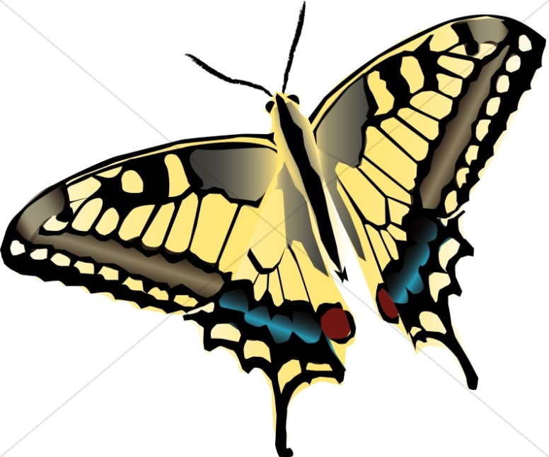 Brightly Patterned Butterfly