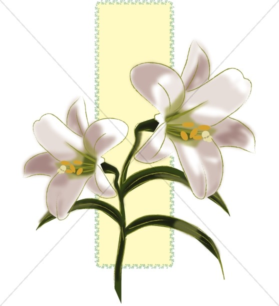 Lilies for Easter Decorations