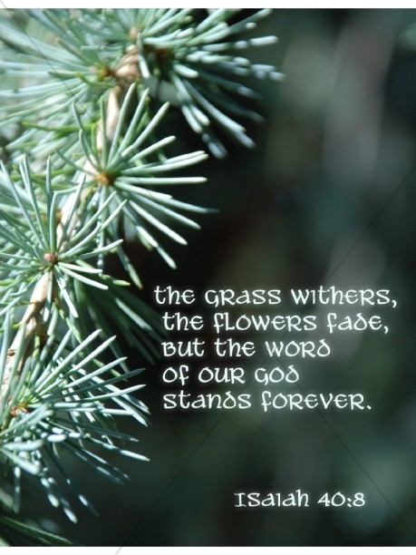 Pine Needles with Isaiah Verse