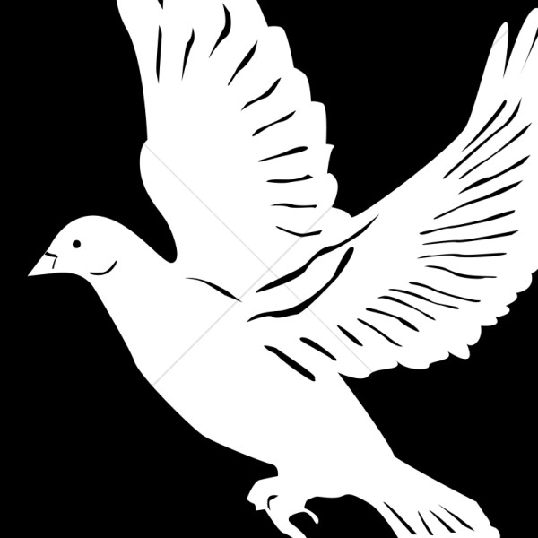 White Dove on Black Background